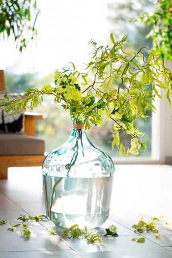 botanic_photographe_aurelie-jeannette_63